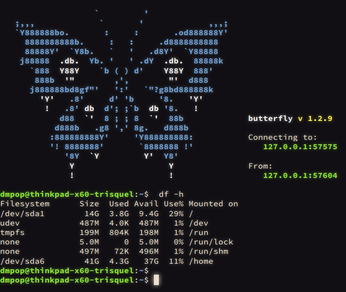 Terminal in browser with Butterfly